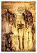 Photo Ancient anatomical drawings by Leonardo DaVinci