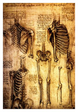 Ancient anatomical drawings by Leonardo DaVinci