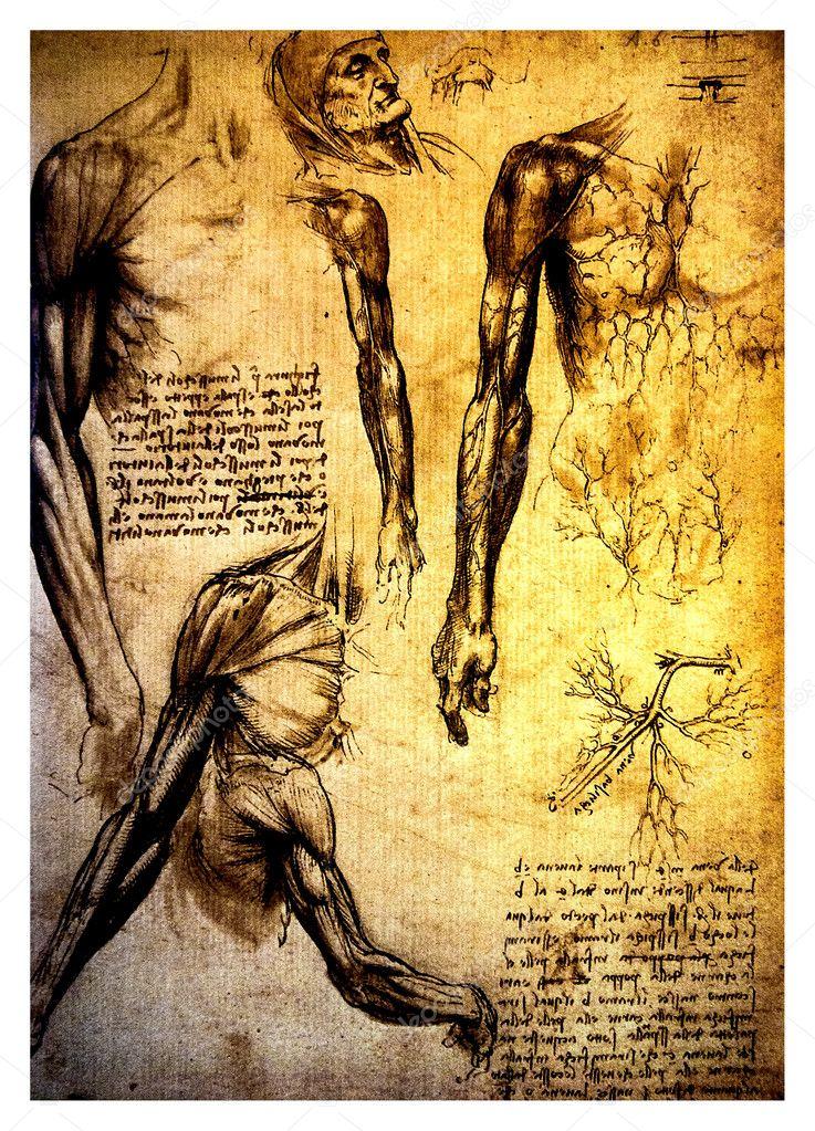 antiguos dibujos anatómicos de leonardo davinci — Fotos de Stock ...
