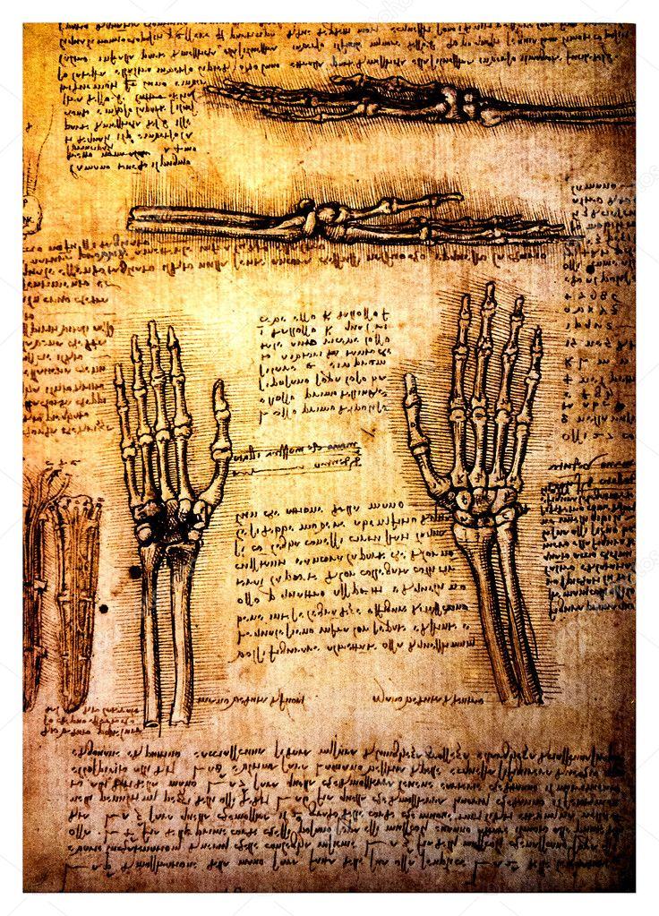 da vinci anatomy drawings pdf