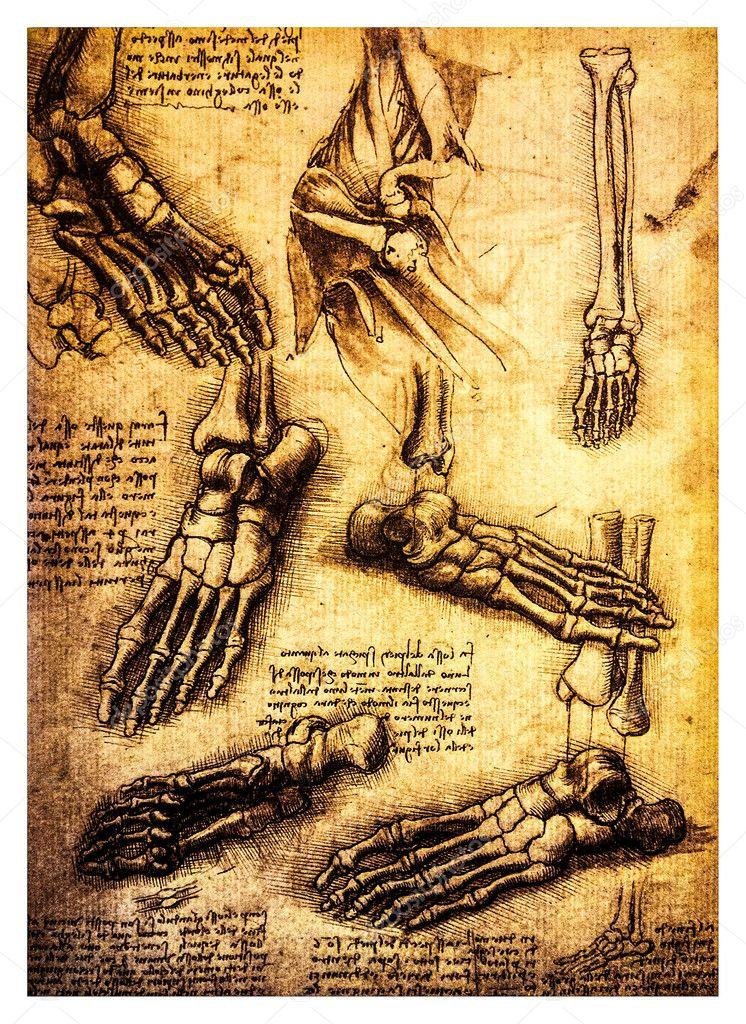 Ancient anatomical drawings by Leonardo DaVinci — Stock Photo ...