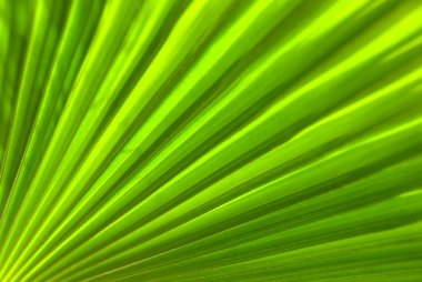 A close up view of a palm leaf - macro stock vector