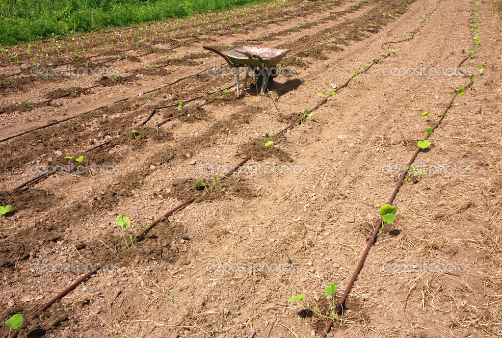 Truck in agricultural garden with drip irrigation