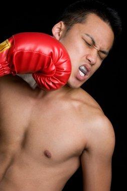 Youn boxer