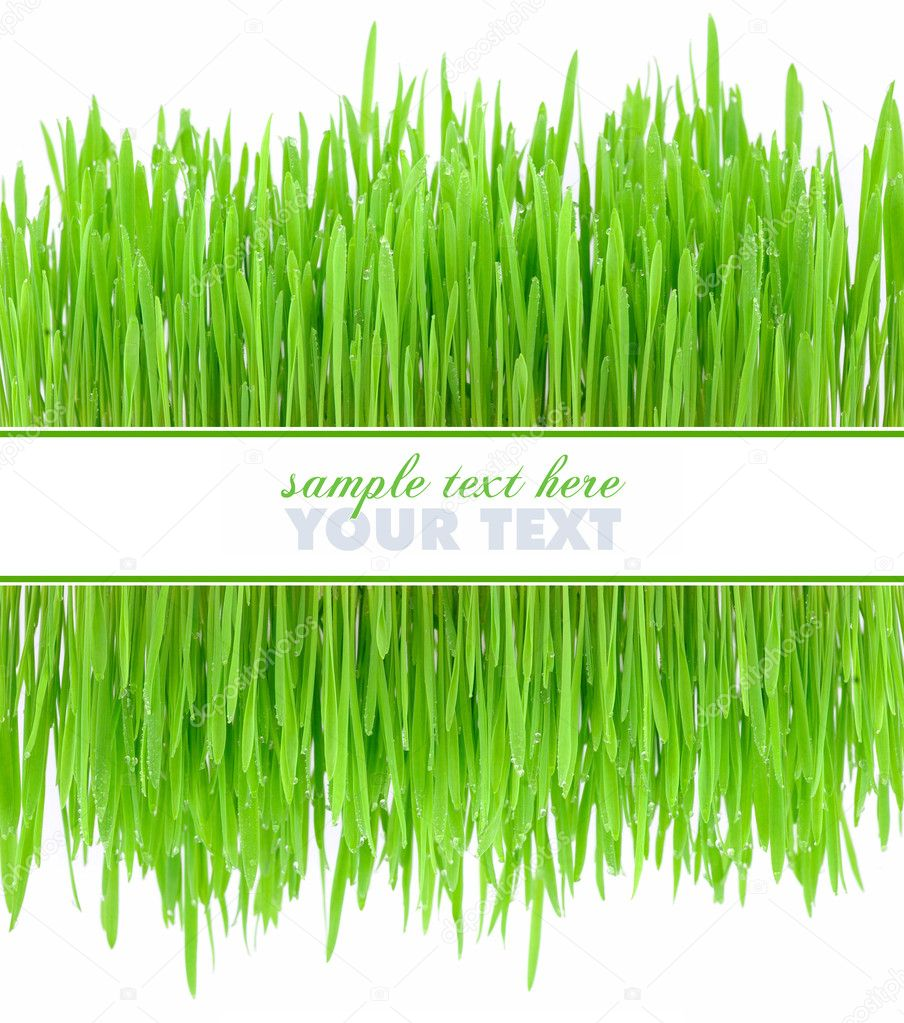 Frame is from a green grass on a white background