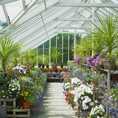Greenhouse, Birr Castle Gardens, County Offaly, Ireland