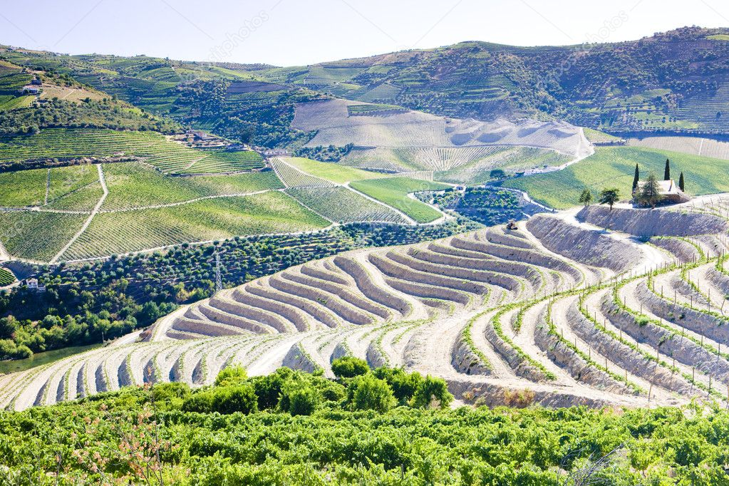 Vineyars in Douro Valley, Portugal