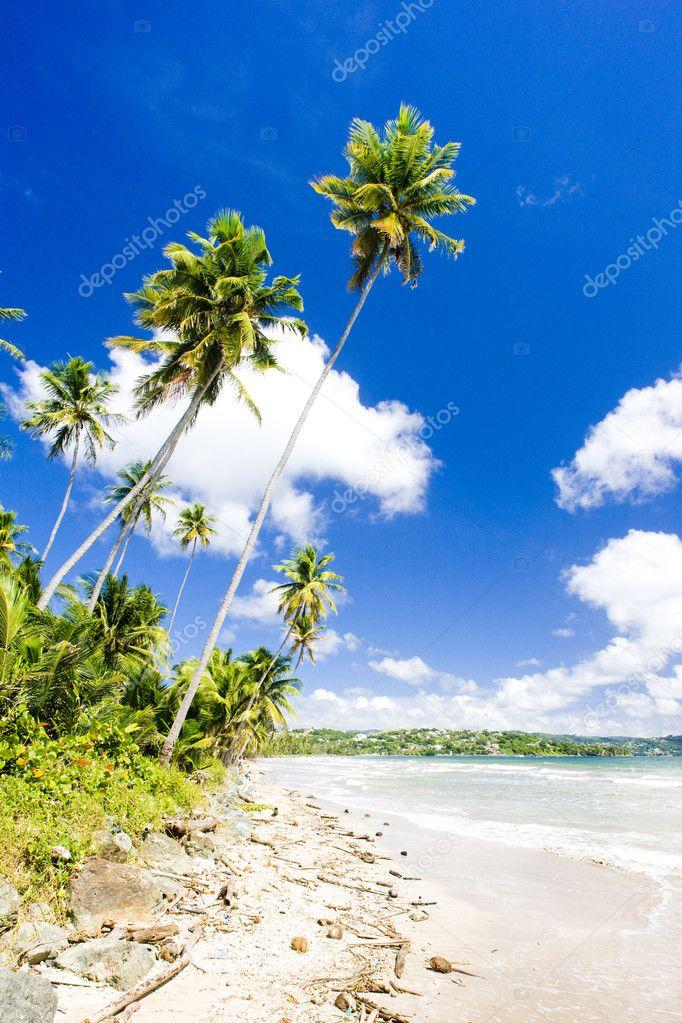 Rockly Bay, Tobago