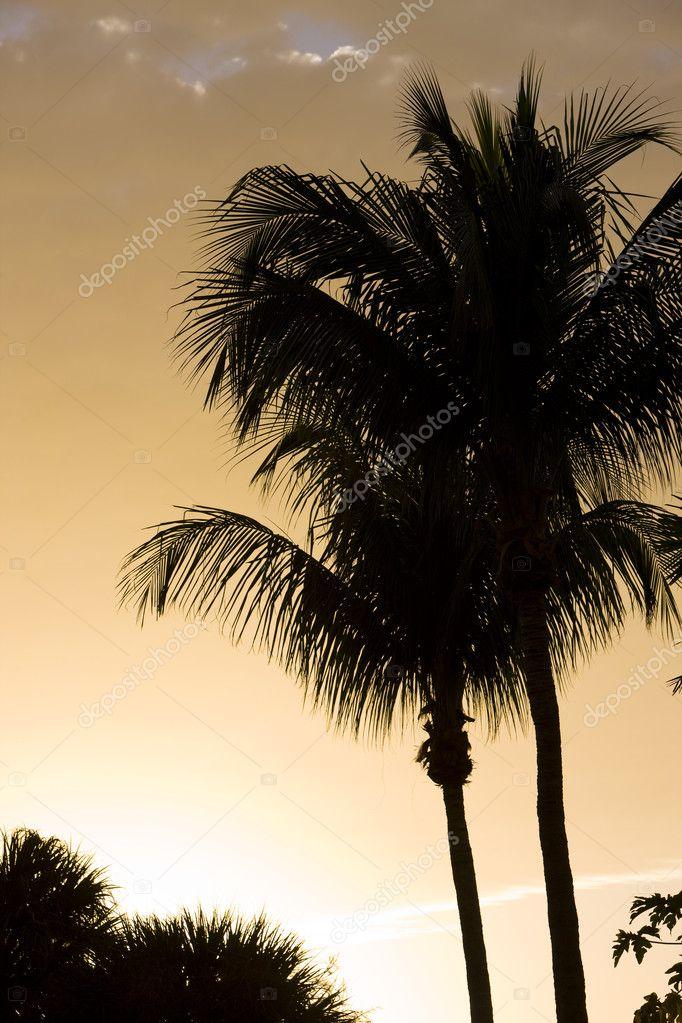 Silhouette of palm trees, Florida, USA