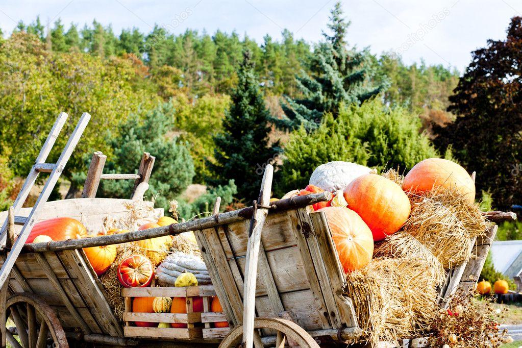 Still life of pumpkins on cart stock vector