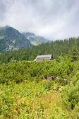 Krajina poblíž Popradské tarn, vysoke tatry (Vysoké Tatry), slova