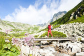 Fotografie Woman backpacker in Great Cold Valley, Vysoke Tatry (High Tatras