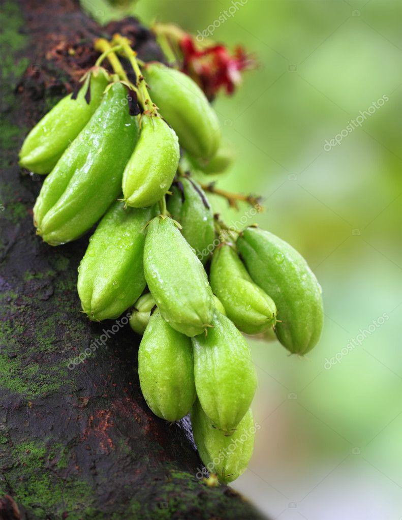 Bilimbi fruits