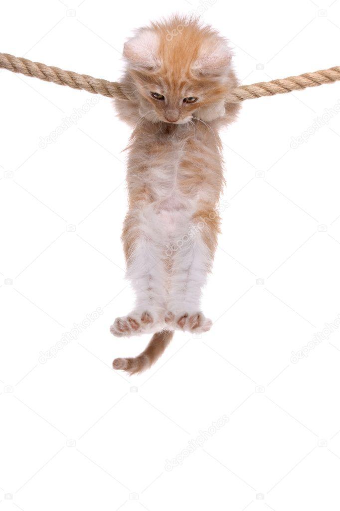 котенок висит картинки мизинца руке очень