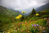 Photo Flowers in summer mountains