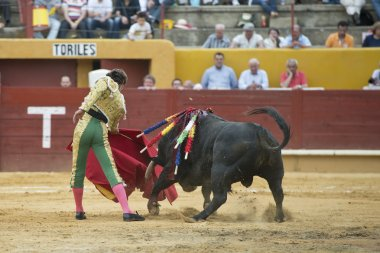 Bullfighter and bull.