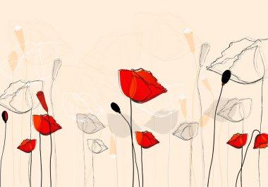 Beautiful summer poppies