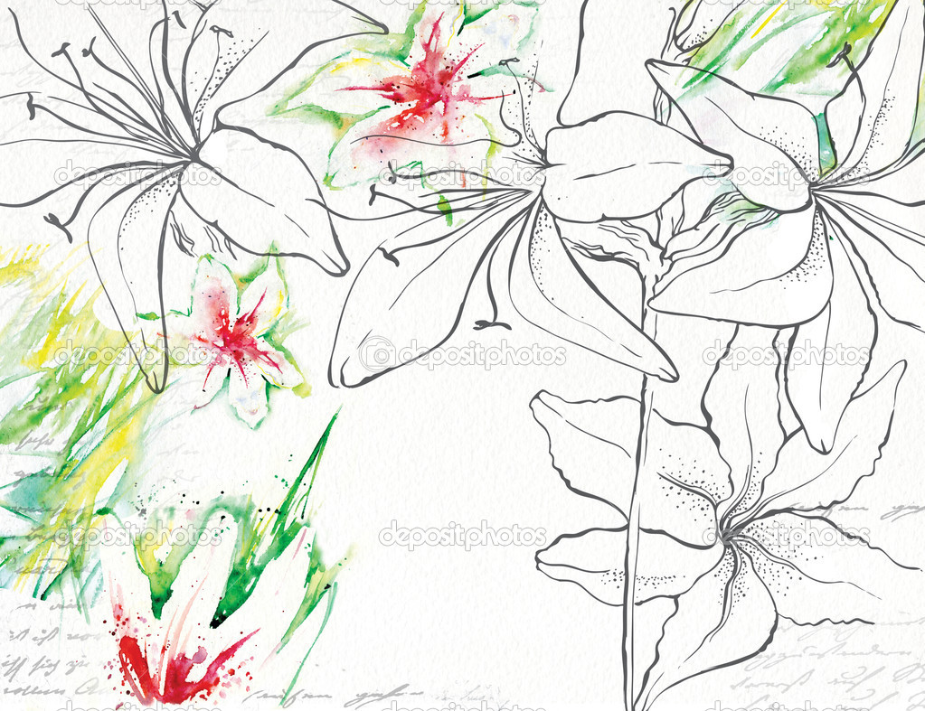 Drawing Lily made with watercolor and ink