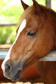 Fotografie Pferd