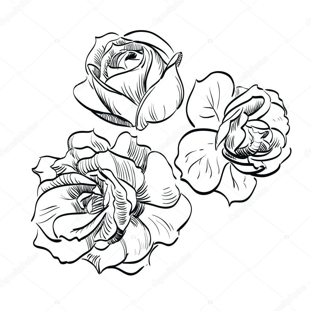 Black rose on white background