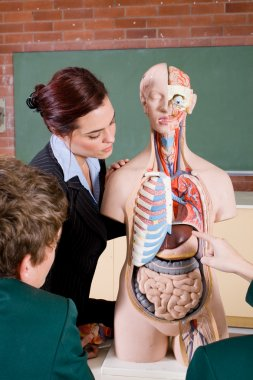 Teacher teaching human anatomy