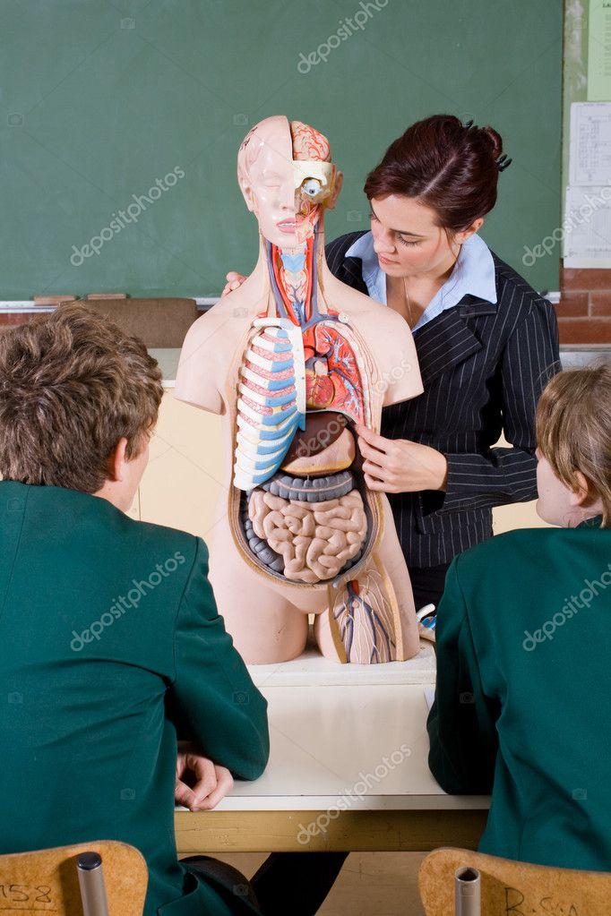 Profesora de enseñanza de la anatomía humana en la clase de biología ...