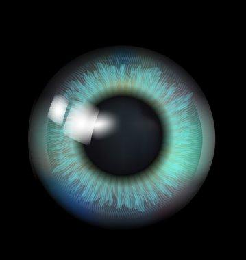 Beautiful Eyeball stock vector