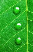 Kapky vody na zelený list / Super makro