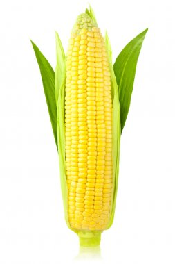 Ear of Corn / vertical / isolated on a white background