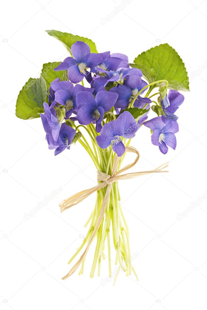 https://static9.depositphotos.com/1015060/1155/i/950/depositphotos_11551440-stock-photo-bouquet-of-violets.jpg