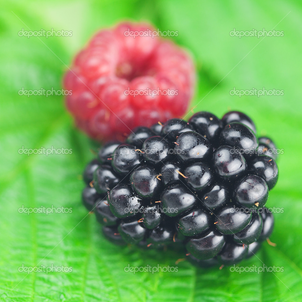 Raspberries, blackberries and green leaves