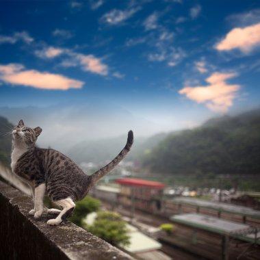 Cat with nice sky