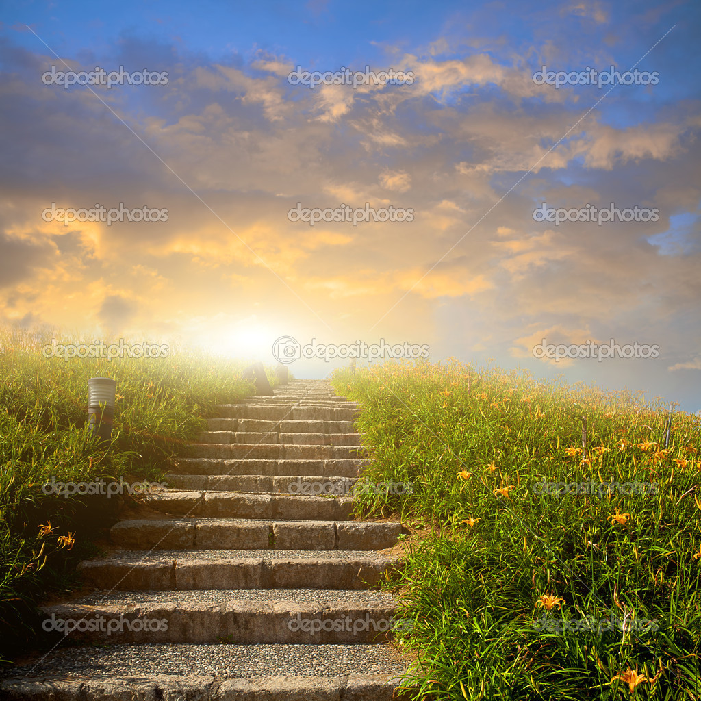 Mountain flower meadow with Ladder