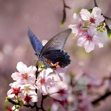 """Картина, постер, плакат, фотообои """"butterfly on nice flower"""", артикул 12201754"""