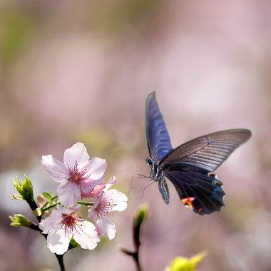 """Картина, постер, плакат, фотообои """"butterfly on nice flower"""", артикул 12201766"""