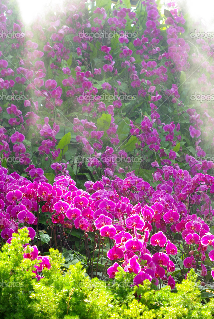 Nice orchid garden with sunlight