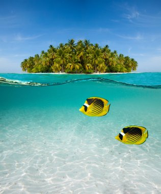 Palm island and underwater world