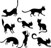 Fotografia gatto insieme