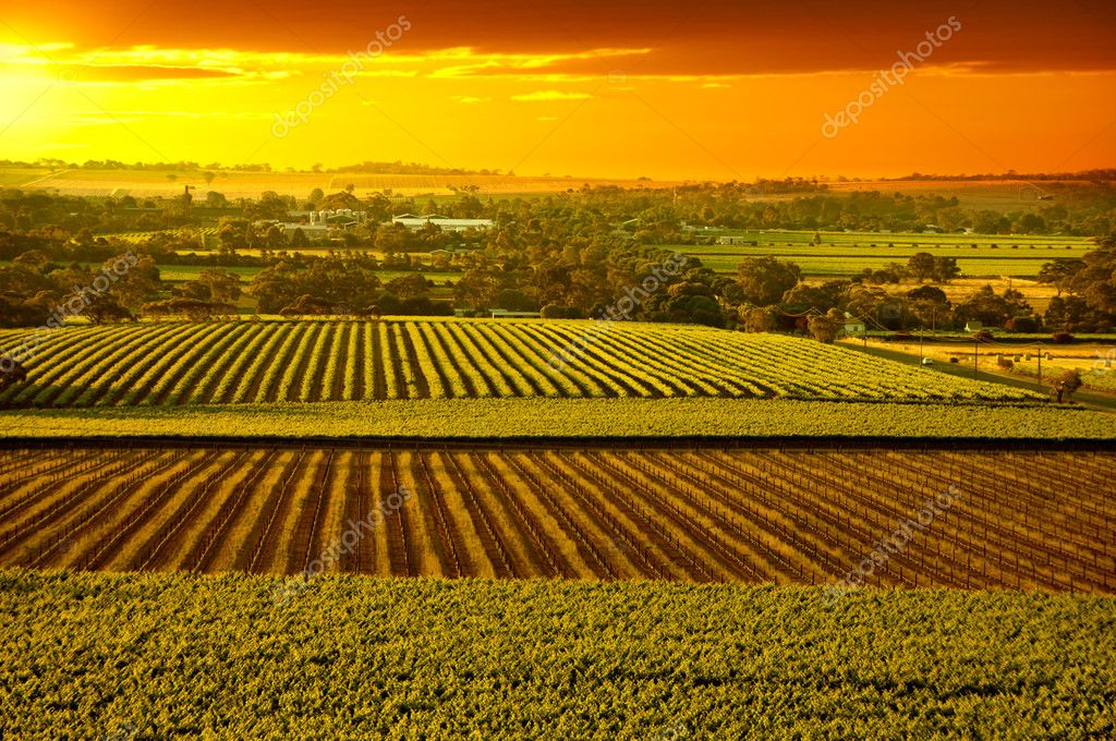 Barossa Vineyards Australia