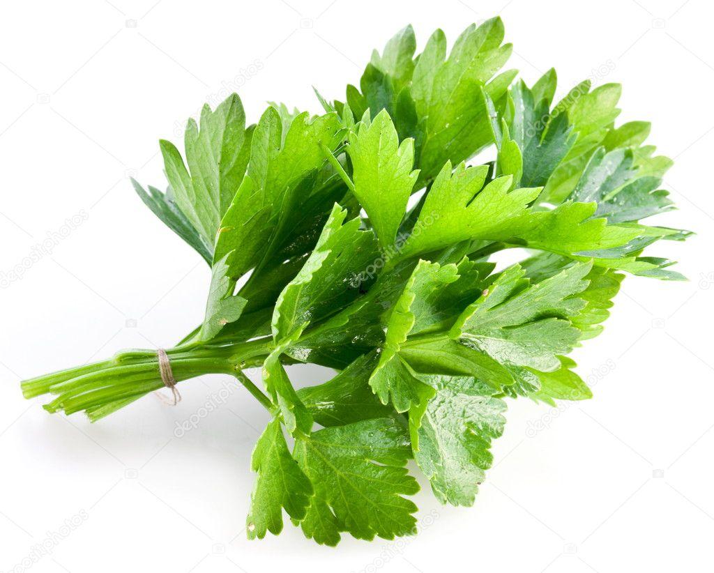 Bunch of green coriander