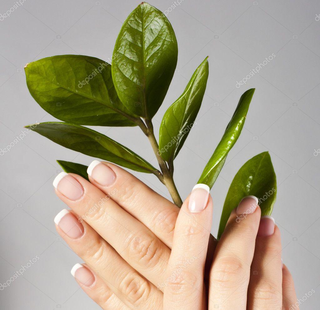 hermosas manos con uñas de manicura francesa — Fotos de Stock ...