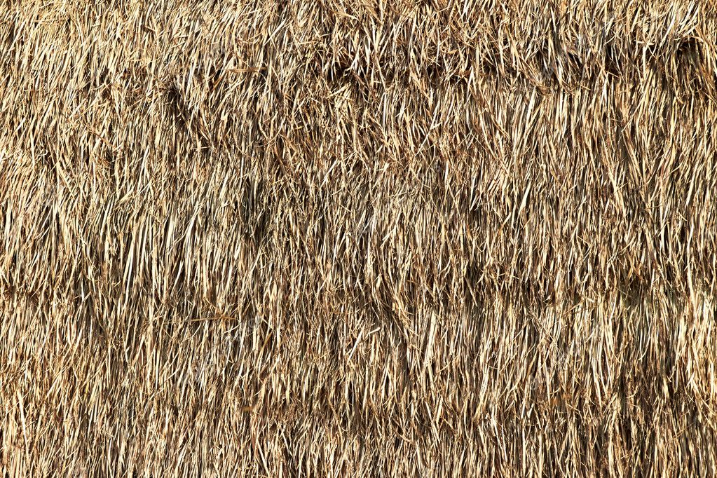 Thatched Palm Leaf Roof Stock Photo 169 Dima266f 11380823