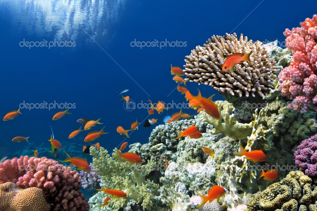Фотообои Tropical Fish on Coral Reef in the Red Sea