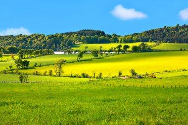 Beautiful, Spring landscape