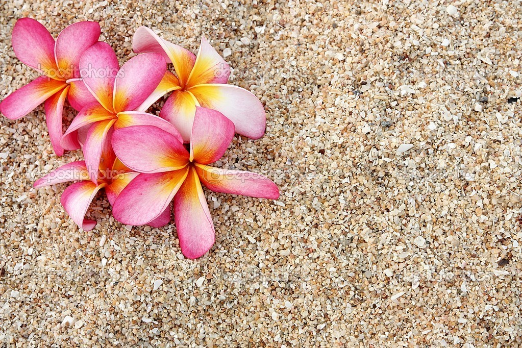 Pink Leelawadee flower on the white sand