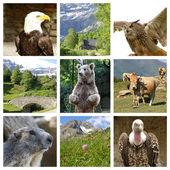 A gyűjtemény a vadon élő állatok