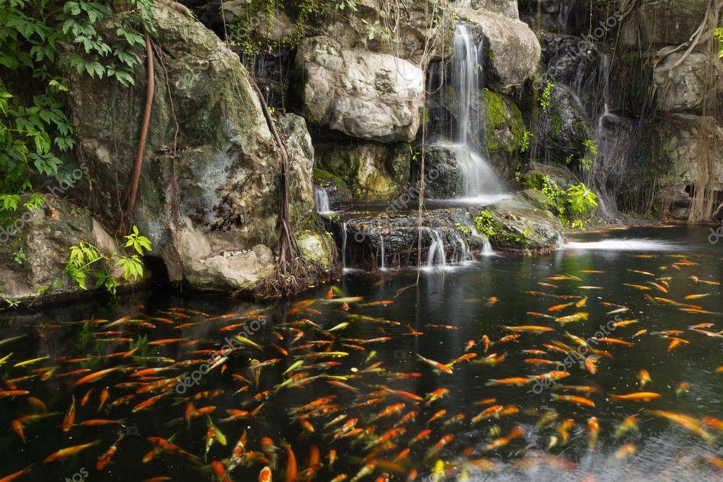 Pesce koi nel laghetto presso il giardino con cascata for Cascata laghetto