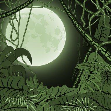 Jungle-8