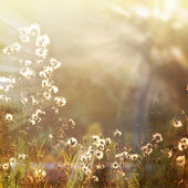 Fotografie květ-6