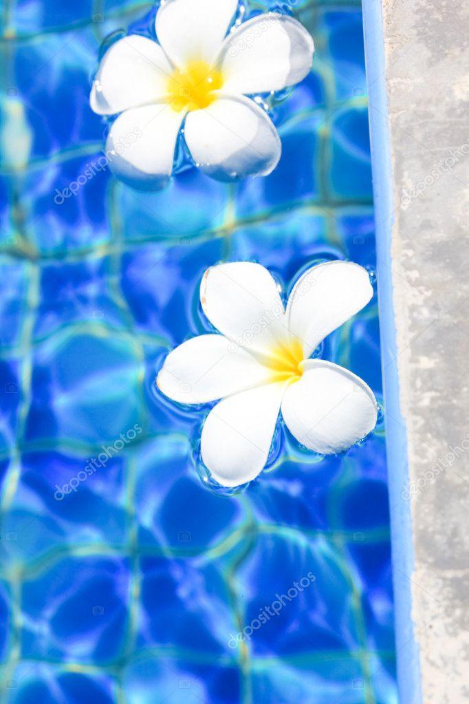 Tropischen Framevektorillustration Swimmingpool Blumen Dschungelpflanzen  Palmen Zweige Design Vertikale Rahmen Schöne Tropische Design Für  Einladungskarten Promo Poster Helle Farben Stock Vektor Art und mehr Bilder  von Ast - Pflanzenbestandteil - iStock